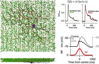 Circuit model of the retina exploring motion anticipation